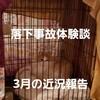 猫の落下事故から8ヶ月目!3月の近況報告について