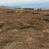 16日、2年ぶりに吾妻開パ跡地の太陽光発電用地を岩渕友参院議員とともに調査。木の伐採が進んでいます。