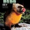宮崎学 イマドキの野生動物