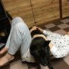 甲斐犬サン、ダイエットに協力するの巻〜ヾ( -`д´-,,) シッカリシロョ!!