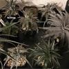 冬季の植物達
