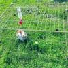 庭でうさんぽ、天気が良い日はクローバー畑で遊んだり、日向ぼっこしているよ。
