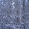 白い木々のむこうから