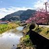 千葉県鋸南町で河津桜を堪能してきたよ