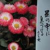 3月12日誕生日の花と花言葉