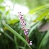 夏の清澄庭園をGRⅡで撮ってみる。下を向いて、歩こう。【清澄白河お散歩日記】