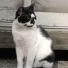 12月4日 江東区亀戸から江戸川区大杉までの猫さま歩き とその情景