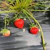 【4月】家庭菜園振り返り 収穫と植え付け