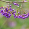 アクセサリーのような冬の紫