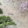 桜と松のShall we dance?