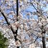 サステナブル経営と民間経営手法−東京都が中央卸売市場経営指針(案)を発表