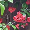 認知症の父 介護疲れが甦った昨夜 庭の花画像は癒し