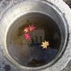 花火と紅葉