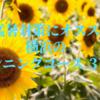 猛暑対策にオススメ 横浜のランニングコース3選!