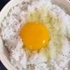 カンボジアで卵かけご飯に挑戦しています。