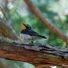 日本 5月29日の文殊の森公園の野鳥など