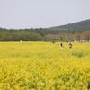 済州島(チェジュ島)の四季折々の風景をまとめてお届け!