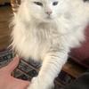 母の日ディナーでコース丸ごとお持ち帰り:お手をする猫
