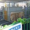 住宅展示場でホワイトライオンと握手!