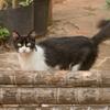 なつっこいご近所の猫