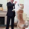 プーチンと秋田犬ゆめ