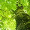 【富士】三国山稜 富士山の絶景と、ブナ巨木の森トレイル