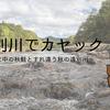 【遠別川でカヤック】遡上中の秋鮭とすれ違う秋の遠別川
