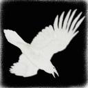 白烏のチラ裏
