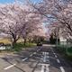 桜の名勝伏見川