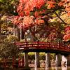 高野山紅葉真っ盛り(2)壇上伽藍エリア