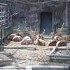 SH WALK vol.4 東山動植物園撮影会