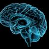 視床の機能解剖