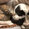【猫画像】キジトラ猫がすくすくと育っているので書いていく