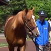 【新馬戦考察】新馬戦のオルフェと早生まれとMデムーさんと【新馬戦予想ブログ】