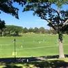 【NZワーホリ】オークランドで大きな公園、Auckland Domain。クリスマスにはコカコーラ主催のイベントや、2月にはランタンフェスティバルがあります♪