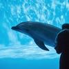 イルカの夢を見た