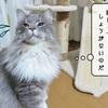 猫の病気 ~むくの内視鏡検査の日~