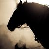 【スカーレットカラー 競走馬データ】過去レース分析 & 追い切り 回顧まとめ