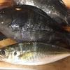 餌釣り師から学ぶ