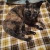 ルームシェアをしているオタク女ふたりが東京で猫を譲り受けることの難しさ【2】
