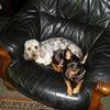 臆病犬と階段考