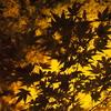 【東京旅行】新宿御苑の紅葉ライトアップが綺麗すぎた件
