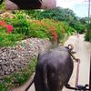◆◇石垣島◇◆