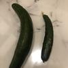 我が家のお父さんすごい!家庭菜園できゅうり初収穫 父の日。日にちもねらった⁈(笑)(≧∇≦)