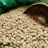 コーヒーの起源や始まりは? ざっくり解説