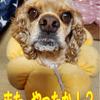 火事場ドロボーかッ!?