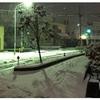 今年の初雪は珍しく4cm積もりました
