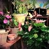 加齢と植物