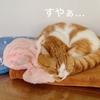 雨続きの日の愛猫の寝床事情。