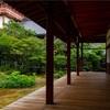 京都・西陣 - 隠れた蓮のお庭 本法寺 巴の庭